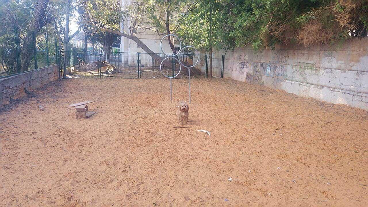 הגינה לפני שפורקה צילום ניר אדיא
