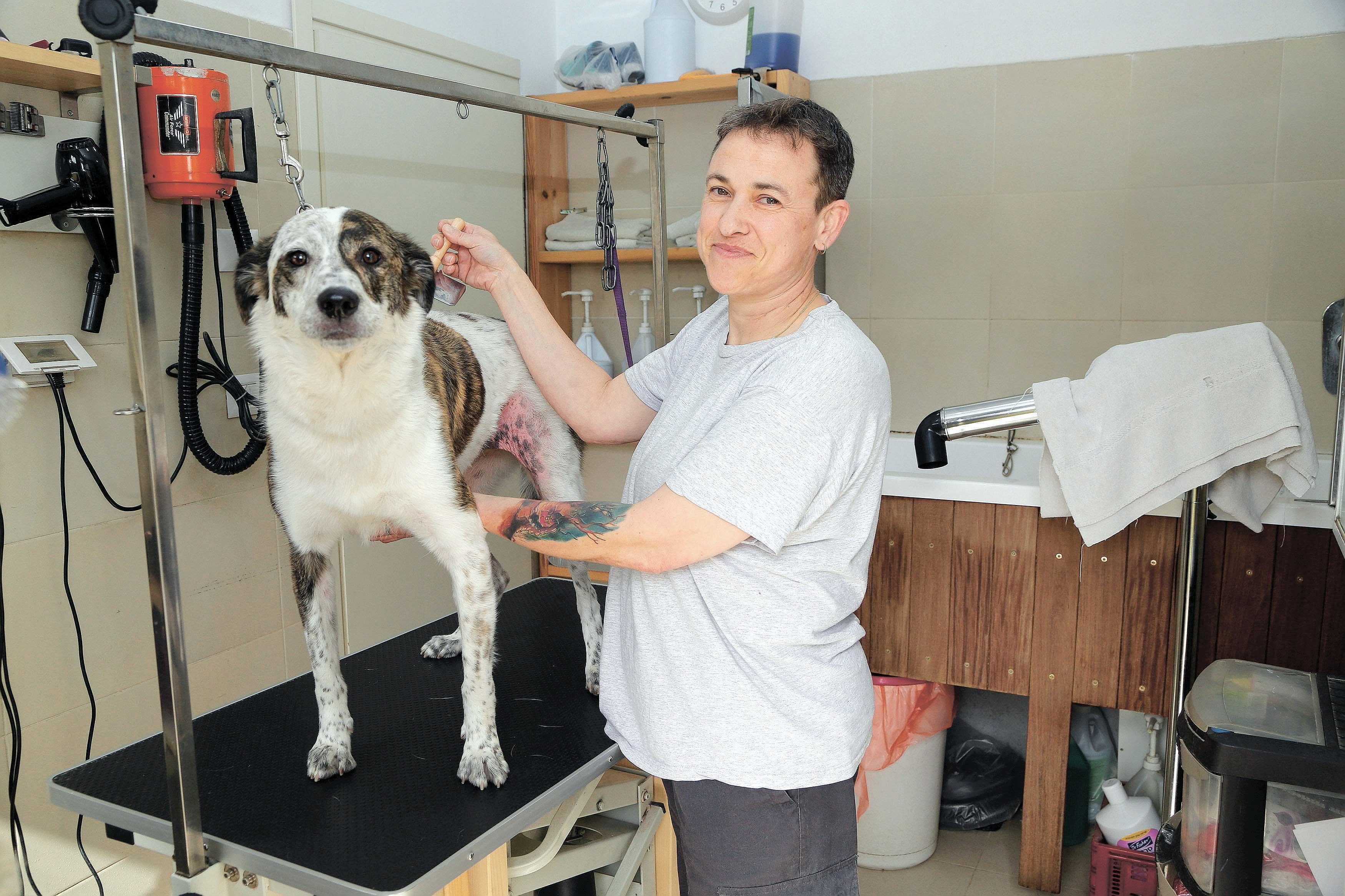 תמי לנצוט, ספרית כלבים צילום: עזרא לוי