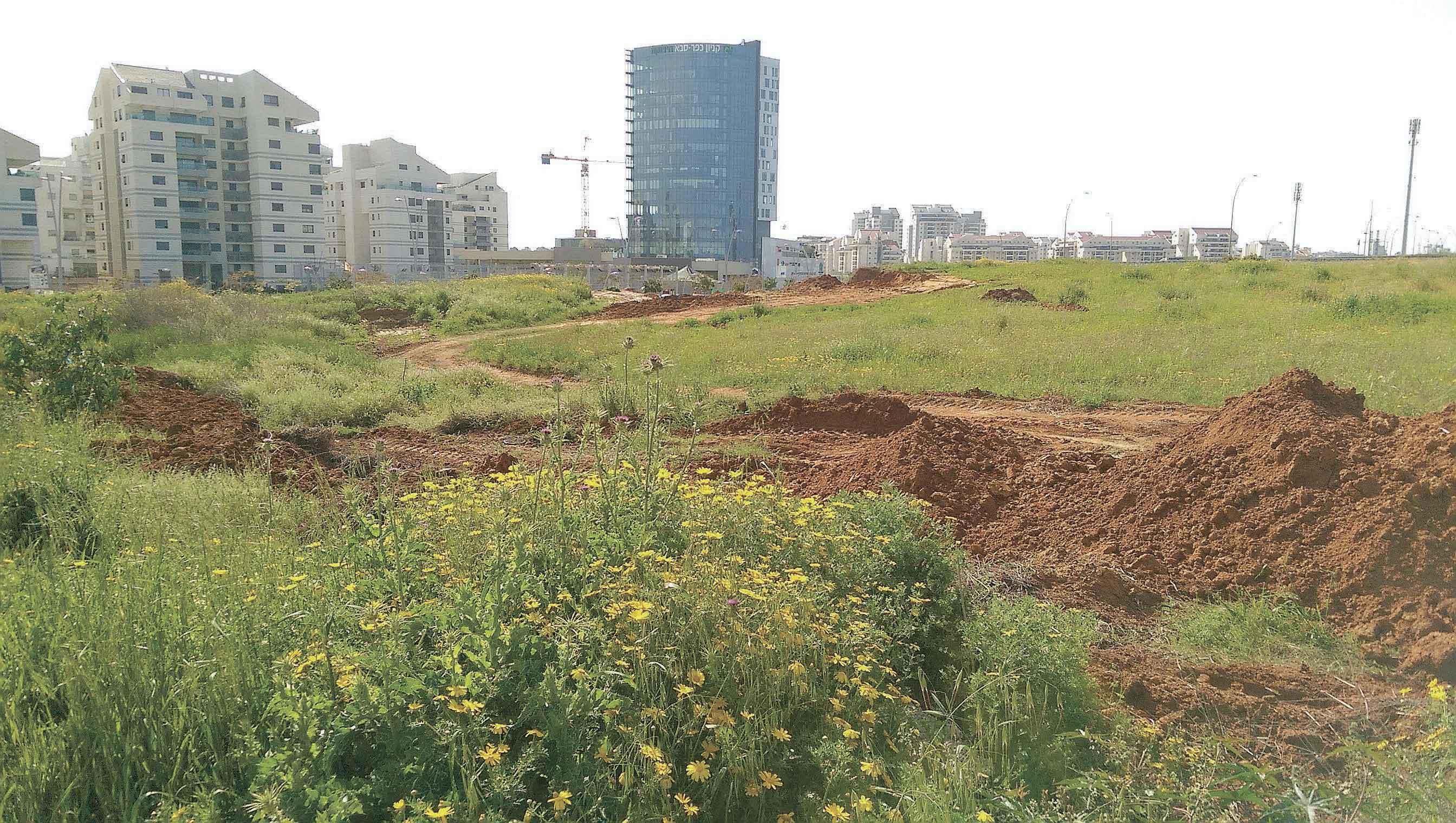 רחוב ספיר כפר סבא הירוקה צילום עזרא לוי