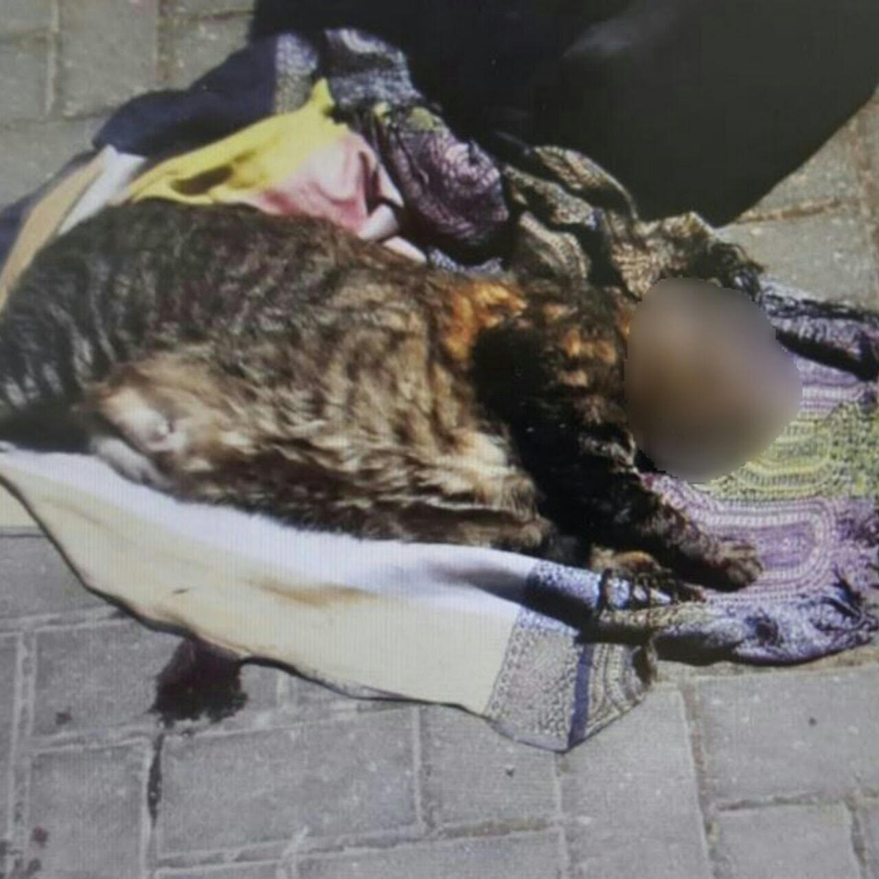 החתול השנזרקה מהחלון צילום דוברות המשטרה