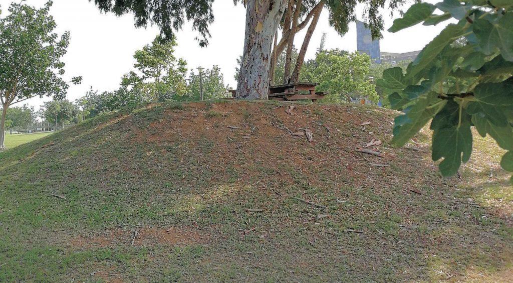 הגבעה בפארק הרצליה צילום עזרא לוי