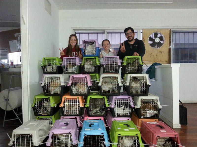 העמותה למען חתולי הרחוב ברעננה