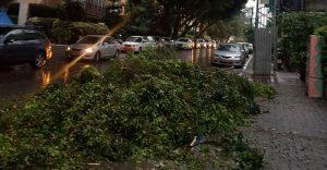 העץ שנפל ברעננה. צילום אבי ברון, חברת החשמל