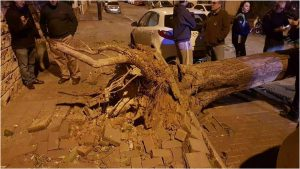 העץ שנעקר משורשיו ברחוב שפינוזה