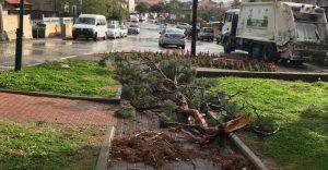 העצים שנפלו בגינת פרץ