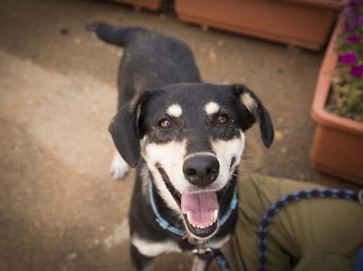 הכלבה פיונה צילום נטלי פוקס