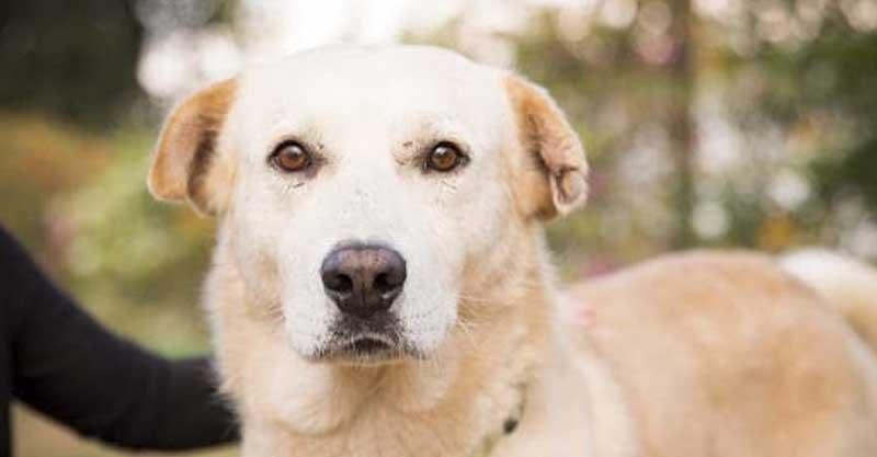 הכלבה טרי קרדיט נטלי פוקס