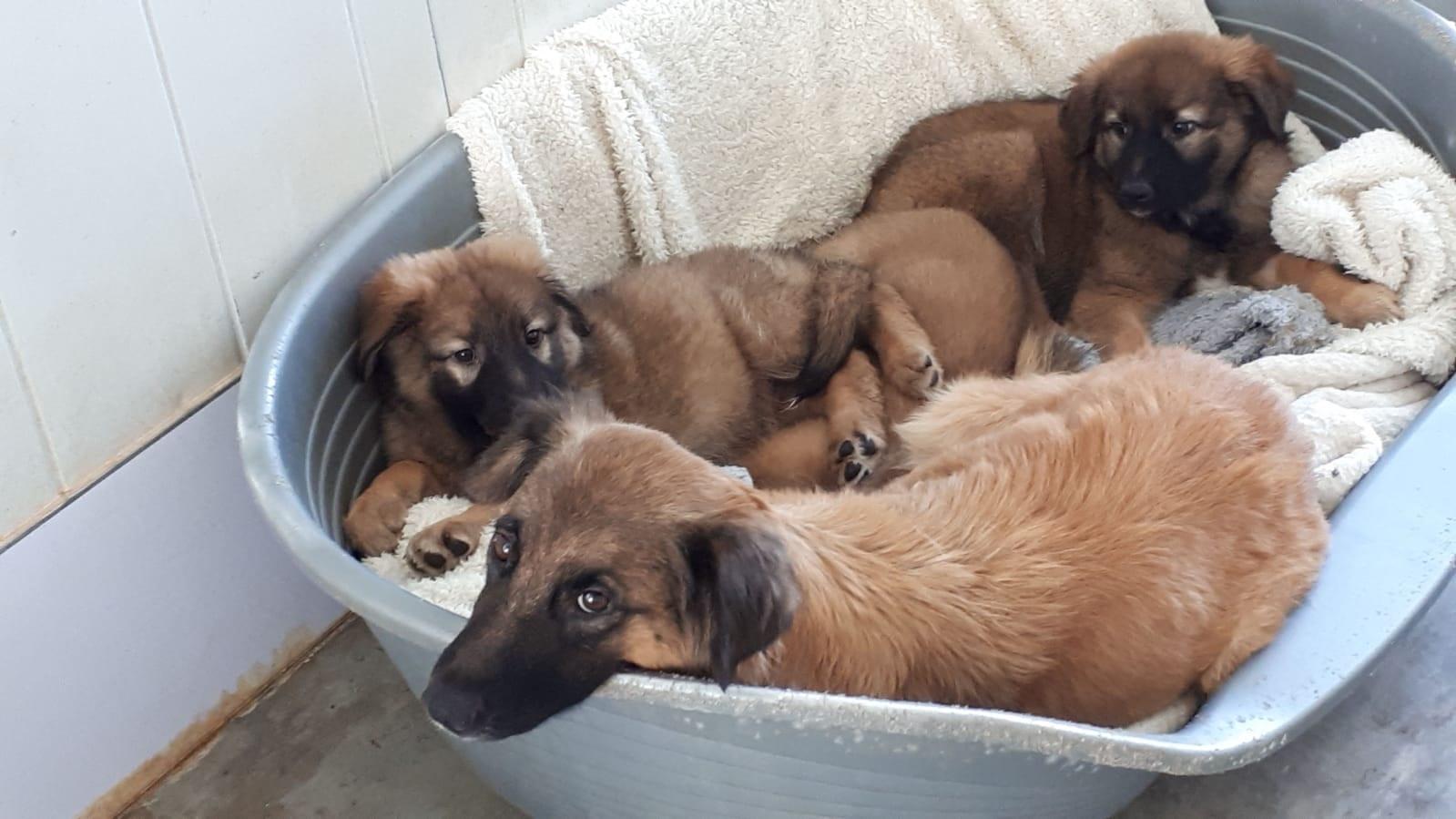 הכלבה בתיה וגוריה, קרדיט: דוברות רעננה
