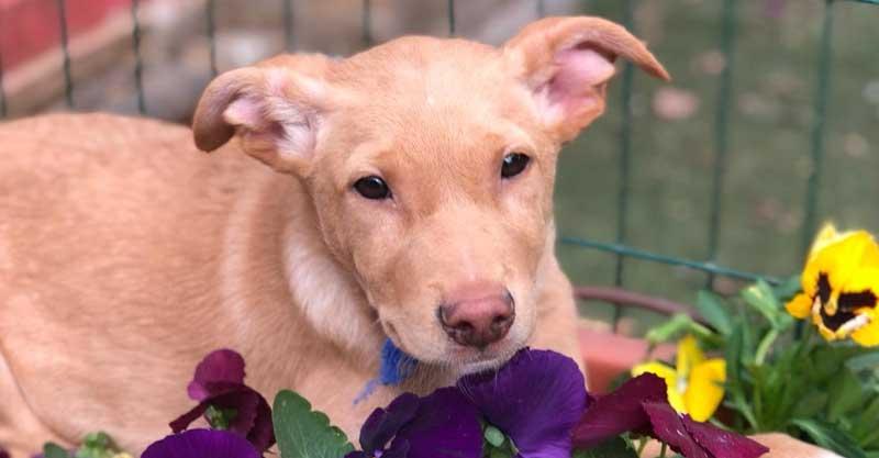 הכלב במבי צילום: נטלי פוקס מעמותת-חבר-לי