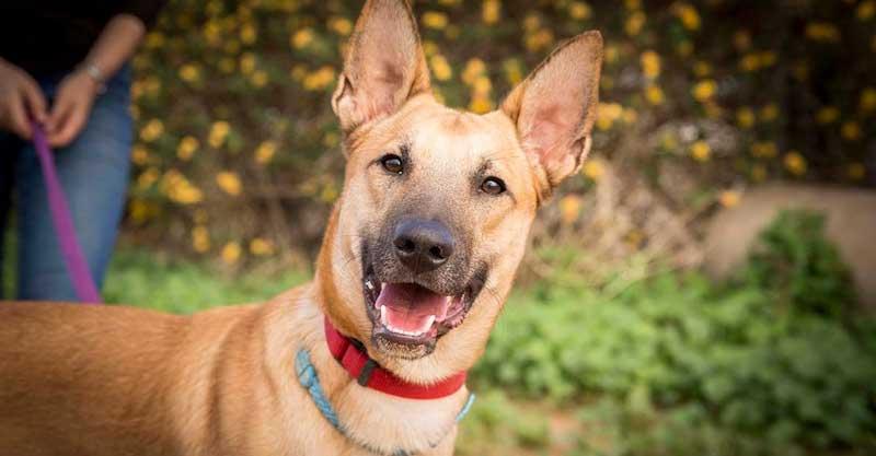 הכלב לאבי צילום נטלי פוקס מעמותת חבר לי