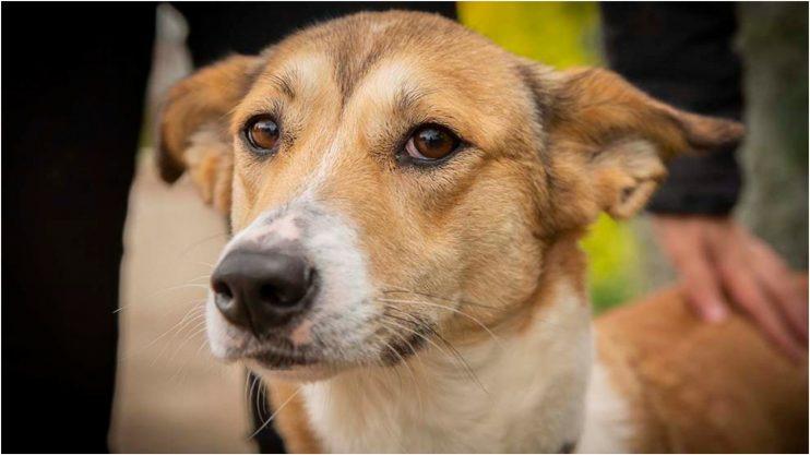 הכלבה טויה, צילום: נטלי פוקס מעמותת חבר לי