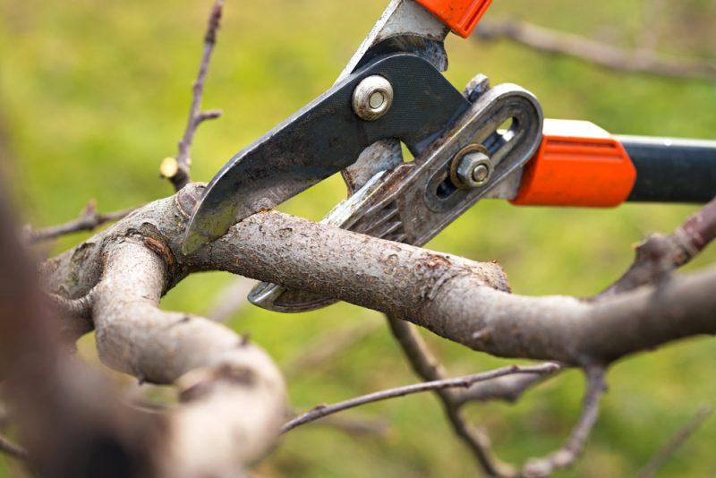 גיזום וכריתת עצים בשרון. תמונה ממאגר Shutterstock