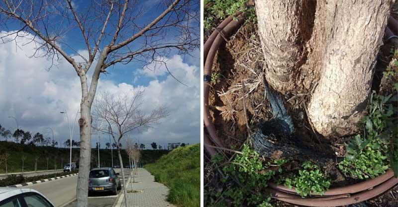 העצים בשכונה הירוקה