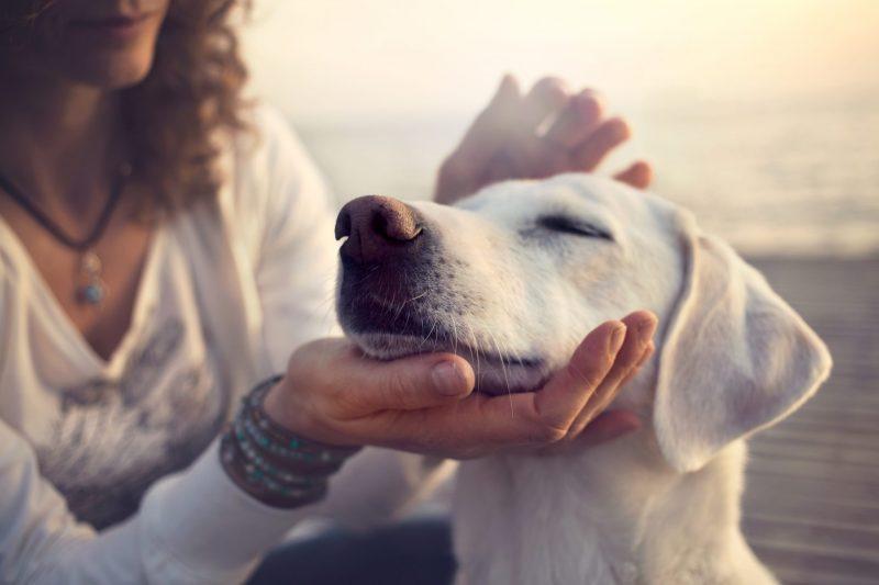 פנסיוני כלבים בשרון. תמונה ממאגר Shutterstock