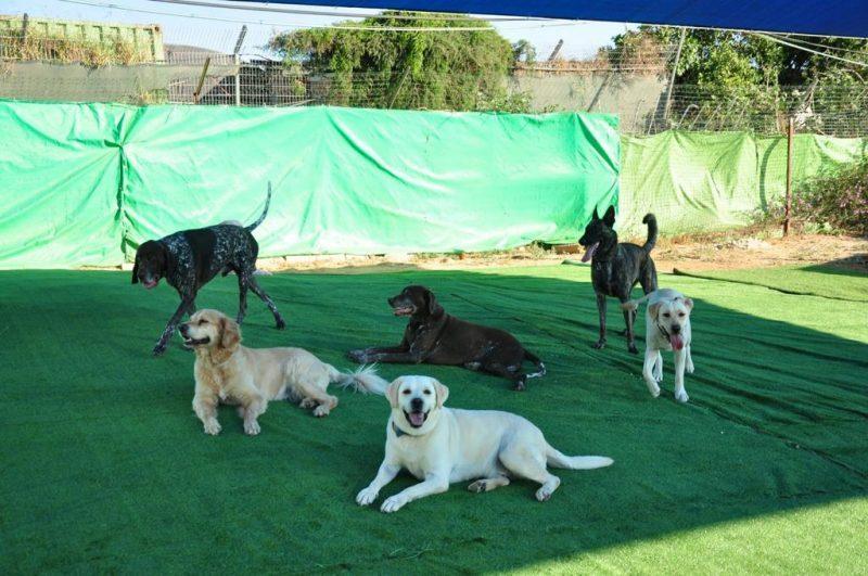 ממלכת הכלבים - פנסיון האוליווד