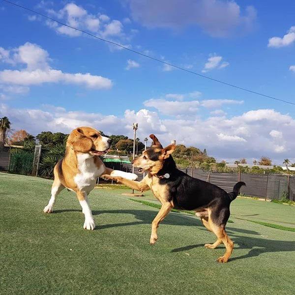 הכלבים של האוליווד