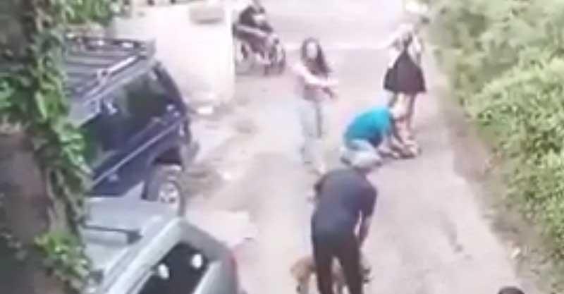 התקיפה של הכלבה טאי על ידי האמסטף. צילום ממצלמת האבטחה