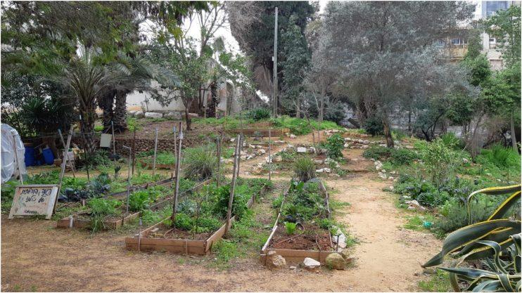 הגינה הקהילתית בשטח בו עתיד לקום בית הכנסת הקונסרבטיבי