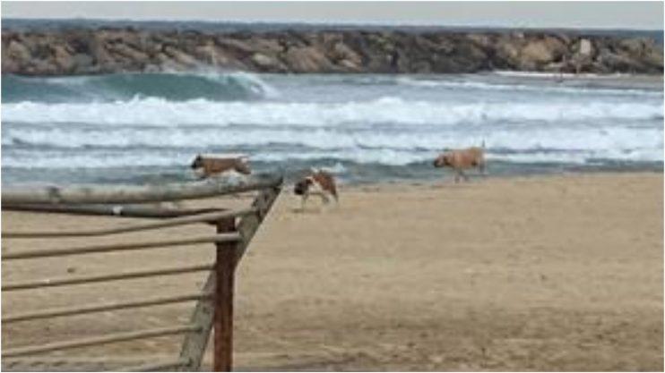 כלבים משוחררים בחוף הרצליה