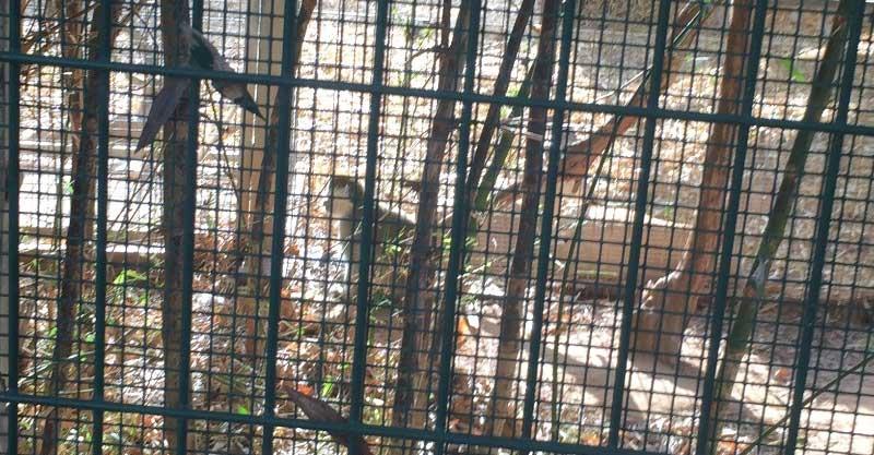 קוף פארק רעננה. צילום מיכל פלד