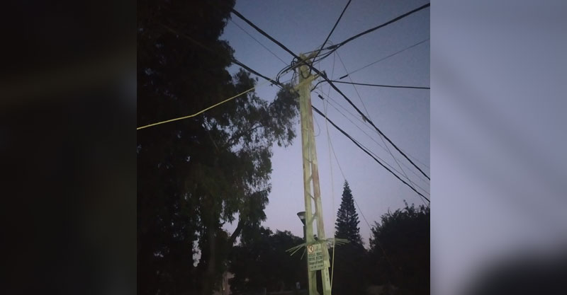 שדרת עצים - גן מבצע קדש ברעננה. צילום באדיבות עידן תושב השכונה.